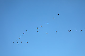 Group of flying birds in blue sky