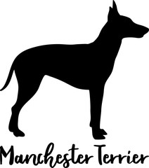 Manchester Terrier silhouette real word