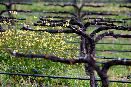 ARROYO GRANDE, CALIFORNIA: A central coast winery.