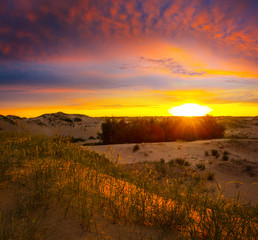 Wall Murals Vineyard summer sandy prairie landscape at the sunset