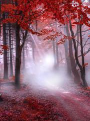 Foto op Aluminium Bossen Mystical red forest