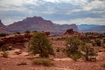 Central Utah Desert