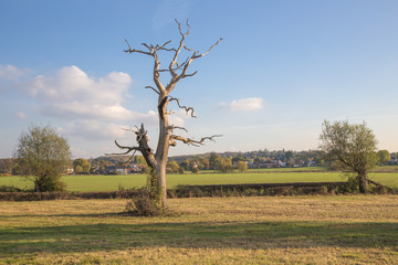 Dead tree in the Essex countryside in Autumn