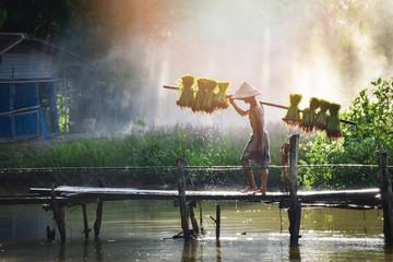 man farmer thai holding rice baby on shoulder walking on wooden bridge plant farmland asia