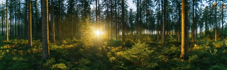 Forest panorama with sunsetlight Wall mural