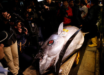 Journalists film a 278kg bluefin tuna, priced with a 333,600,000 yen bid is pictured in front of sushi restaurants Sushi Zanmai in Tokyo