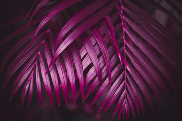Deep dark purple colored palm leaves pattern. Creative layout, toned image filter effect