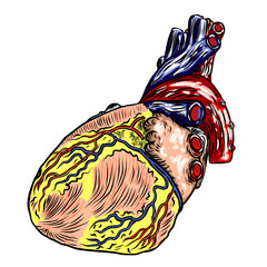 Realistic human heart. Vintage style hand drawing. Cartoonish flash tattoo design engraving. Vector.