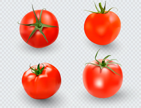 Tomato set. Red tomato collection. Photo-realistic vector tomatoes on transparent background