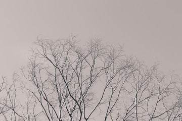 Branches of leaves without leaves of black and white