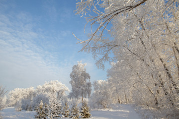 winter landscape, branches of trees in frost