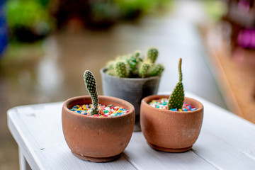 A small cactus used to decorate