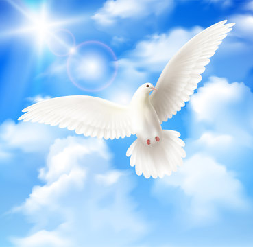 White Pigeon Background