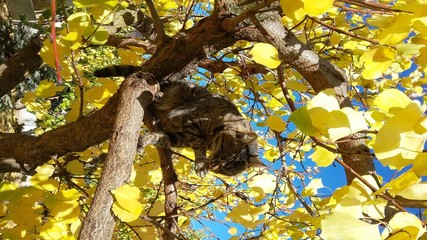 cat on a tree with yellow leaves against a blue sky in autumn