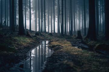 Wald mit Nebel und Spiegelung in Pfütze im Vordergrund Wall mural