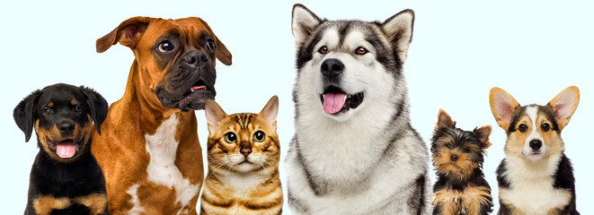 set of pets, dogs