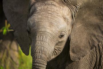 Baby Elephant in the Masai Mara
