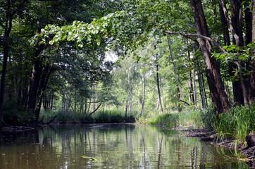 Sapina river in Poland.
