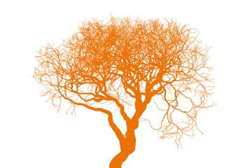 Naked tree silhouette on white background. Fine detailed realistic illustration. Isolated design element. EPS10