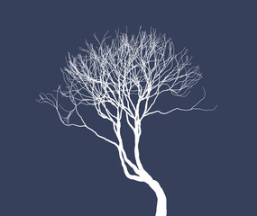 Naked tree silhouette. Fine detailed realistic illustration. Isolated design element. EPS10