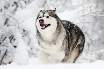 snow dog in cold winter
