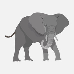 Image elephant, African animal, royal animal