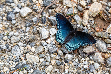 blue butterfly on stone