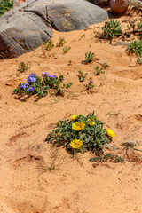 Flowers in Sand. Algarve, Portugal