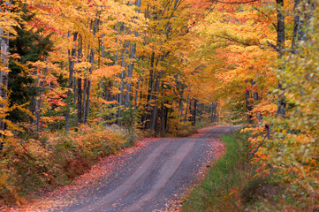 Autumn on Tunnel Road