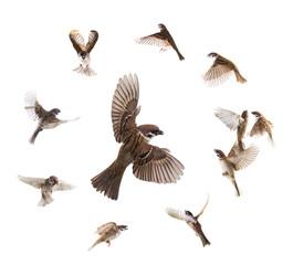 Türaufkleber Vogel collage sparrows flies isolated