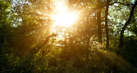 Colourful landscape of sunlight through forest trees.