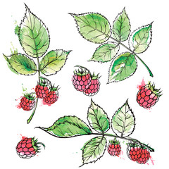 Hand drawn raspberry colored sketch, watercolor