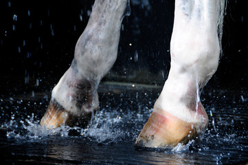 Cleaning hooves with water