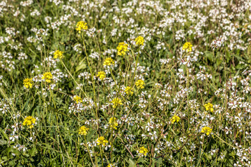 Green and colorful flower field with yellow and white flowers