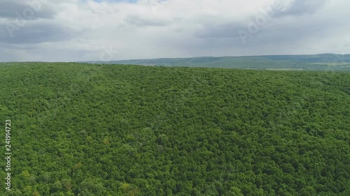 top view of the meadow in the forest with planting trees