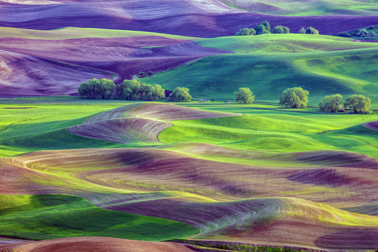 Rolling hills of farmland of Palouse region of Washington State America from Steptoe Butte