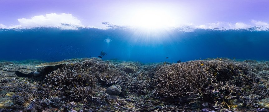 Diver on extremely healthy reef in Indonesia