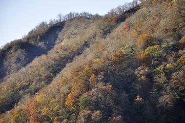 丹沢山の紅葉と日高