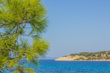 resort tourist summer vacation concept of vivid green tropic south cedar tree and needle branches on foreground and blue sea lagoon water surface with island coast line on background, copy space