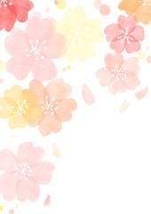 桜 春 和紙 背景