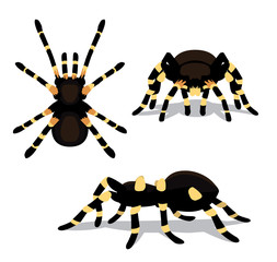 Spider Tarantula Cartoon Poses Vector Illustration