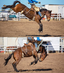 Cowboy And Bucking Saddle Bronco Collage
