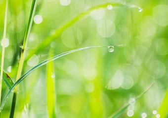 water drop on grass leaf, the rain drop pattern