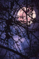 Fototapete - Landscape of sky with super moon behind silhouette of tree branch.