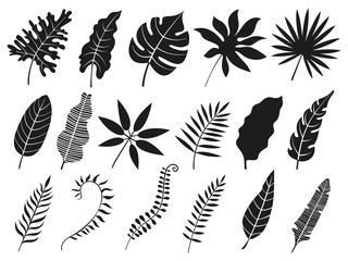 Palm leaf silhouette. Monstera frond, plant leaves silhouettes and tropical palms fronds isolated vector icons set
