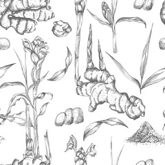 Seamless pattern hand drawn of Ginger roots, lives and flowers in black color isolated on white background. Retro vintage graphic design. botanical sketch drawing, engraving style