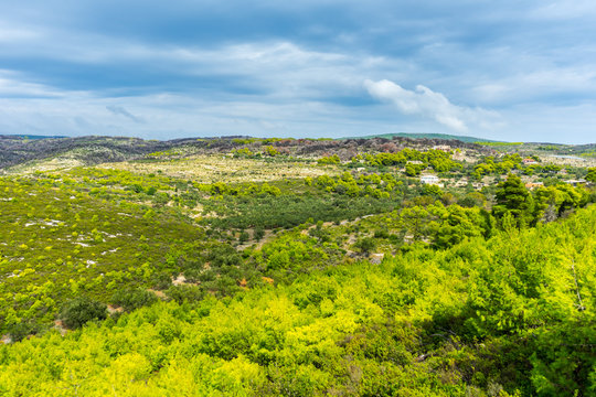 Greece, Zakynthos, Intense green tree covered nature landscape