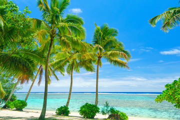 An idyllic beach with palm trees in Rarotonga in the Cook Islands