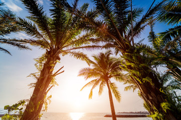 Beautiful tropical beach with palm trees.