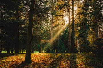 Dark forest with sunlight, Phoenix Park Dublin